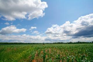 Cinzenta paisagem agrícola