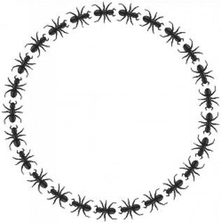 círculo fronteira formiga