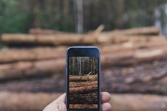 Close-up da mão que toma a foto de toras com o telefone móvel