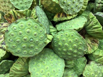 Closeup Fresh Lotus Fruits