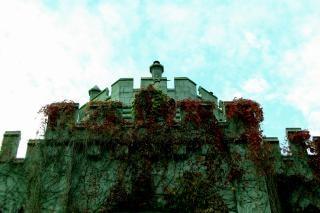 Coberta de hera, parede de castelo