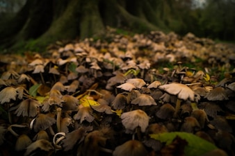 Cogumelos na floresta