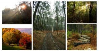 colagem floresta