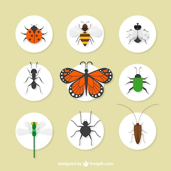 Coleta de insetos