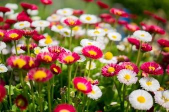 Grupo colorido de flores