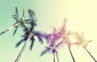 Conceito de férias de viagem de verão. Palmeiras bonitas no fundo do céu azul. Toning.