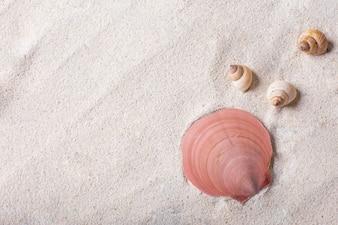 Conchas marinhas com areia como fundo e copyspace, conceito de verão