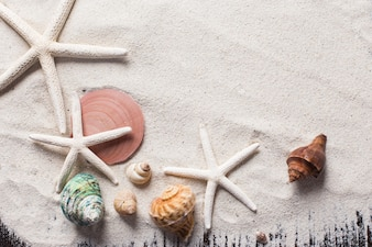 Conchas marinhas com areia como fundo e copyspace, conceito de verão.