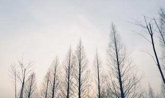 Copas das árvores em um dia de inverno