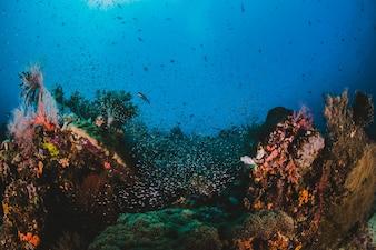 Coral e peixes em torno de Indonésia