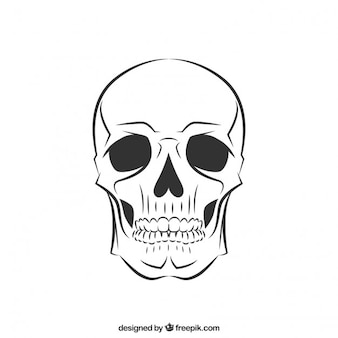 Crânio esboçado