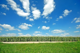 Culturas de campo com um céu com nuvens