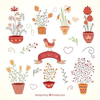 Coleta de plantas bonitos