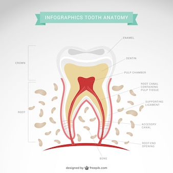 Dentista vetor infográfico