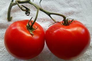 dois tomates suculentos