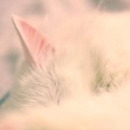dormir gato branco