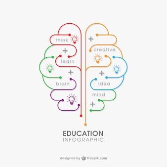 Educação infográfico