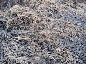 Erva daninha seca no chão