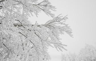 Estação de viagens neve colina natureza