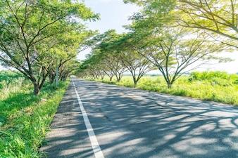 Estrada asfaltada na floresta