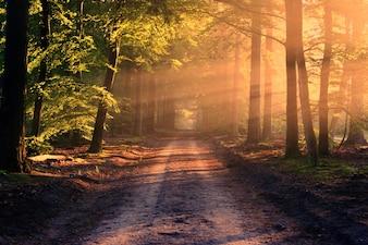 Estrada com raios solares