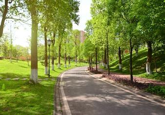 Estrada e natureza