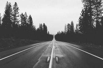 Estrada preto e branco a floresta