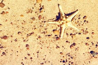 Estrela-do-mar na areia.