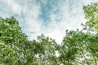 Exterior árvore rural paisagem do verão
