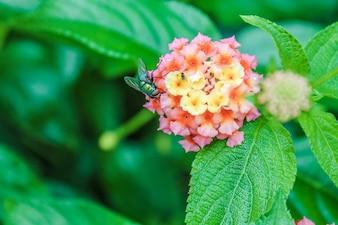 Flor biologia vespa néctar tempo