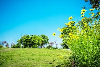 Flor no parque