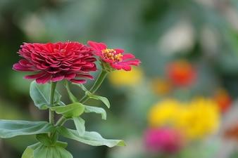 Flor vermelha com fundo fora de foco