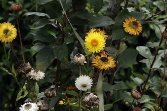 Flores amarelas e brancas