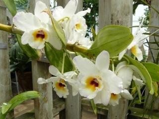 Flores brancas, caule