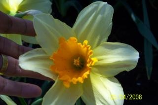 Flores brancas, flores