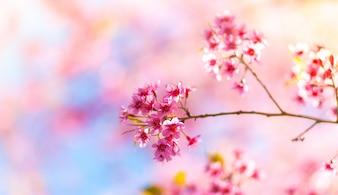 Flores cor de rosa que nascem a partir de um ramo de uma árvore