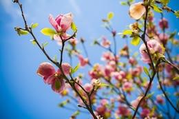 Flores da árvore em flor