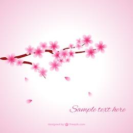Flores de cerejeira macias