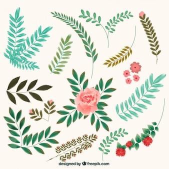 Flores e folhas elementos decorativos