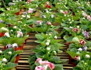 Flores, flor branca,