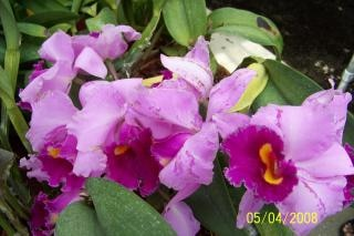 Flores morrendo, flora
