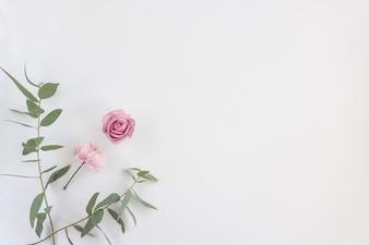 Flores rosa e folhas verdes na superfície branca