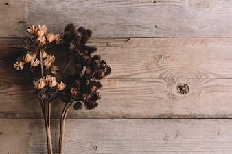 Flores silvestres secas sobre textura de madeira