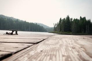Floresta lago