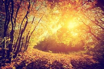 Floresta no por do sol