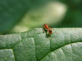 floresta prado formiga inseto animal natureza