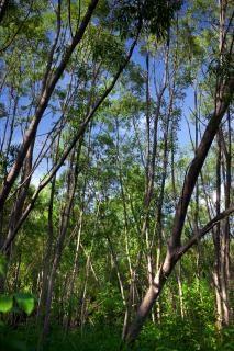 Florestais de Verão, a floresta