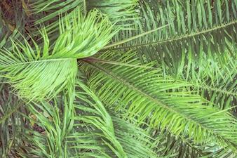 Folha de palmeira para o fundo