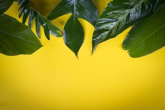 Folha tropical verde em fundo amarelo design para fundo ecológico ou fundo de papel de parede da selva