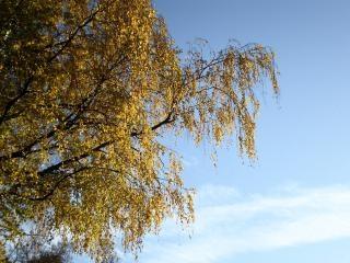 folhas amarelas deixa